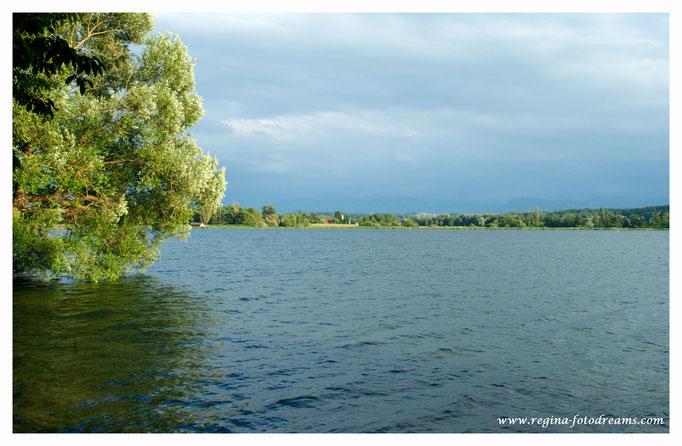 Greifensee mit Blick nach Riedikon und auf die Glarner Alpen (9034)
