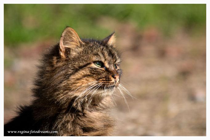 Katze 7218