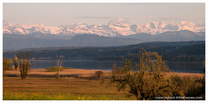 Blick über den Greifensee (7818)