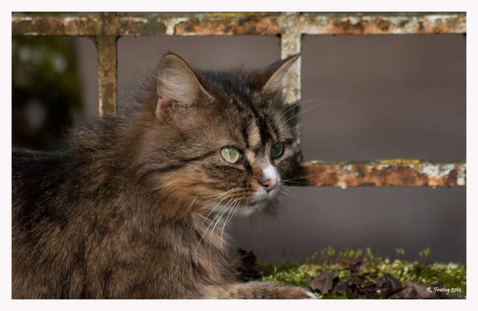 Katze (Art.-Nr. 8291)