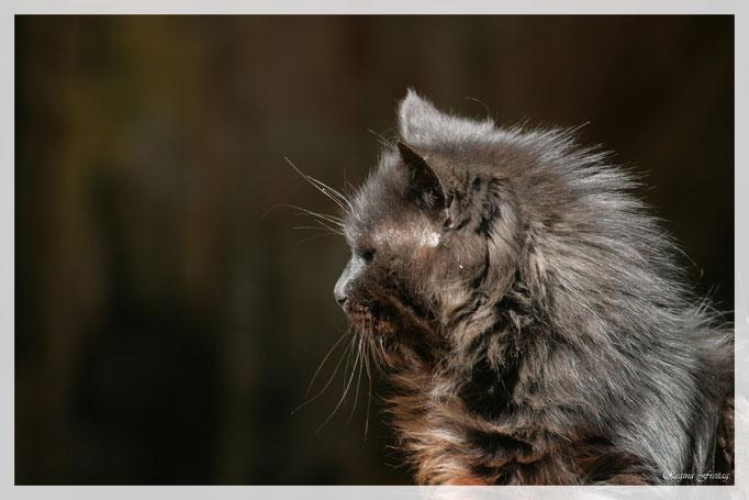 Katze (Art.-Nr. 2512)