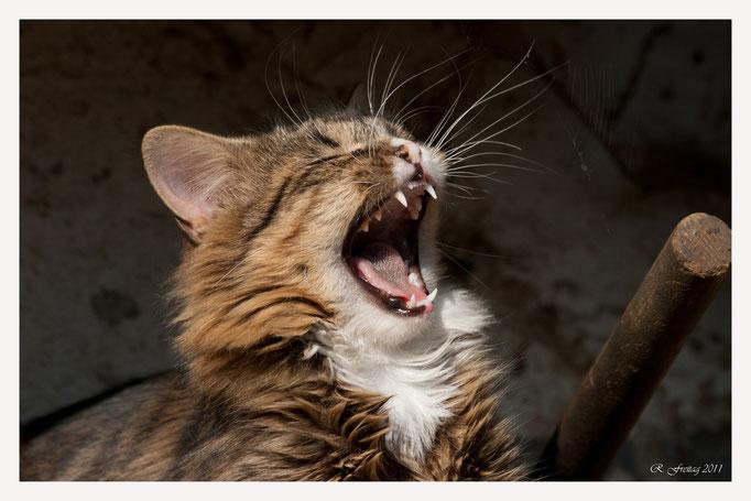 Katze (Art.-Nr. 1110)
