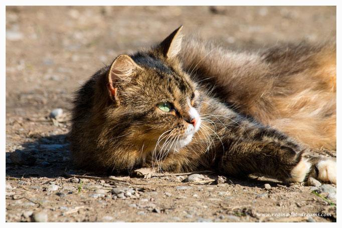Katze (Art.-Nr. 7236)