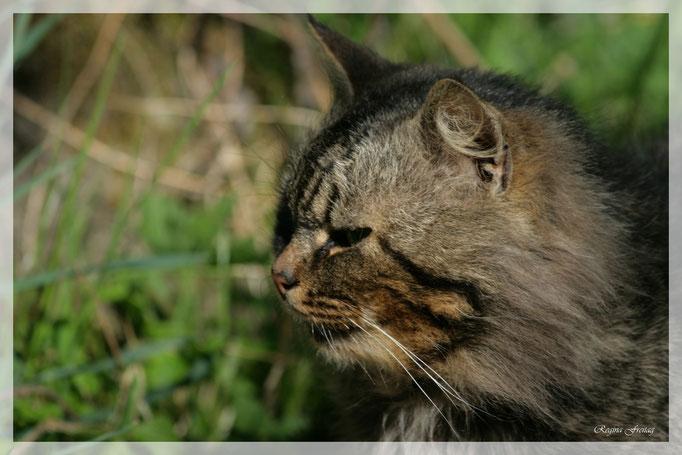 Katze (Art.-Nr. 2764)