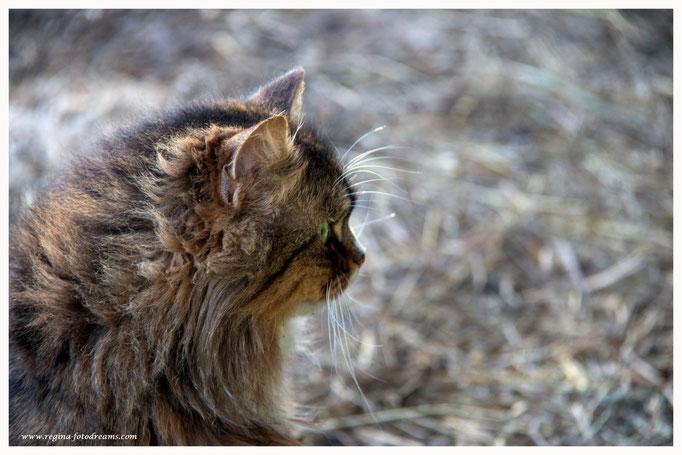 Katze (Art.-Nr. 9398)