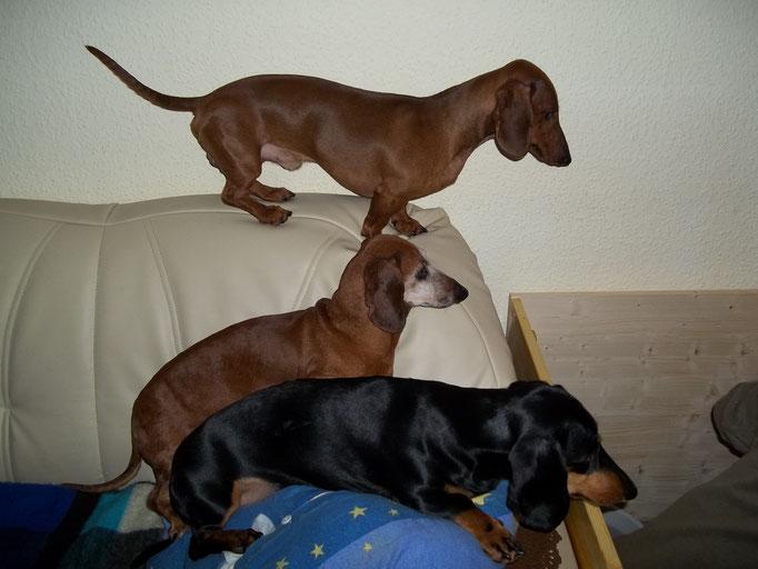 Ivo, Benny und Rikke schauen Welpen TV