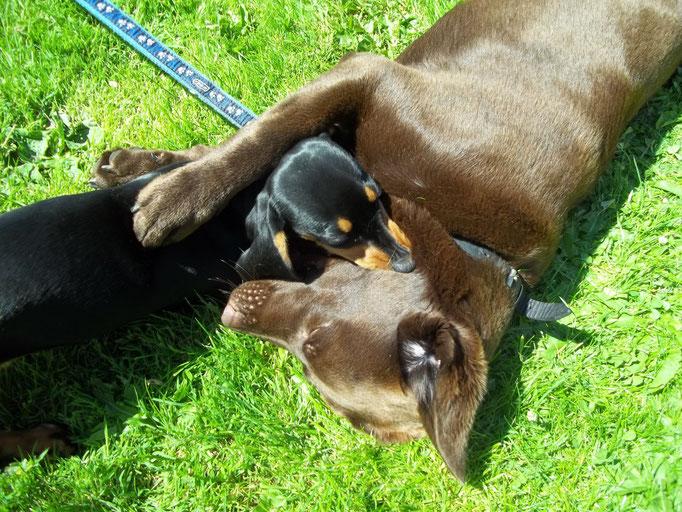 Rikke mit Nachbarshund Alf