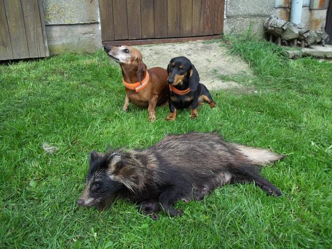 Benny, Rikke und der Marderhund
