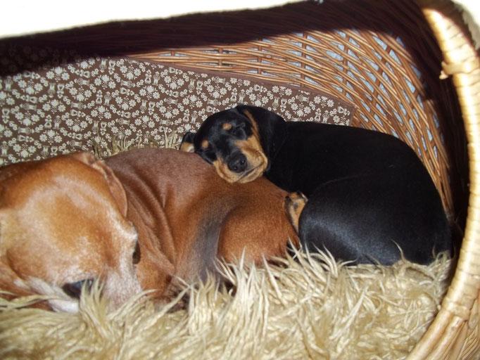 Kuschel mit Benny in der Katzenhöhle