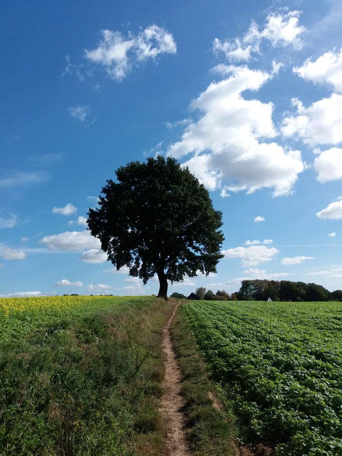 mit wunderschöner Natur und diesem herrlichen Baum als Fotomotiv