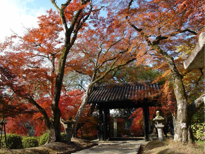 秋月の紅葉(甘木駅)