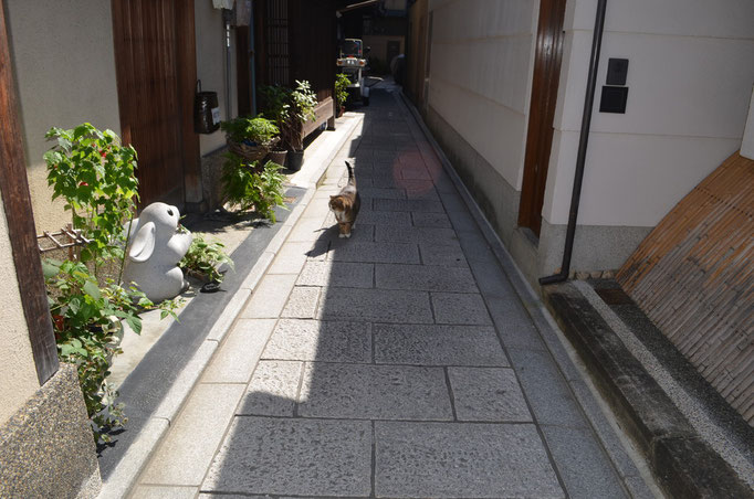 A cat in Gion district in KYOTO