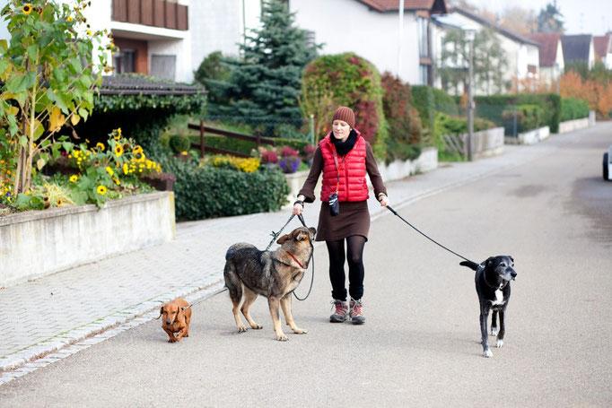 Spaziergang bei Mehrhundehaltung