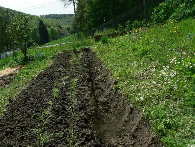 Auch am Donnerstag erledigt, Zwiebeln und Lauchzwiebeln eingepflanzt.