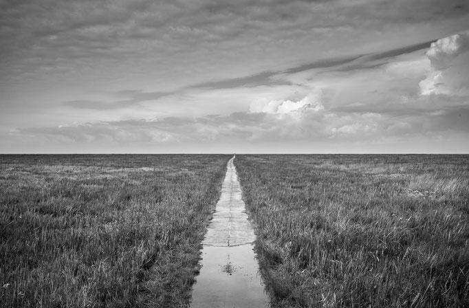 Salzwiesen