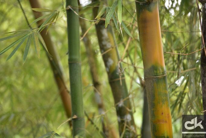 """Blumen und Pflanzen im Regenwald-Nationalpark """"El Yunque"""""""