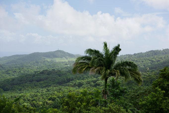 Ausblick zur Ostküste von Barbados