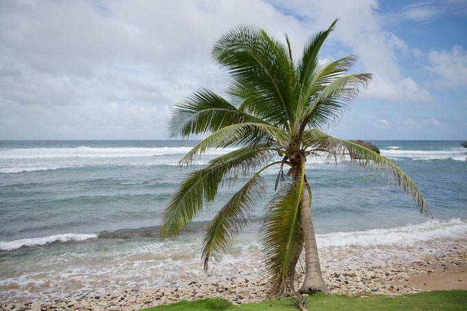 An der Ostküste von Barbados