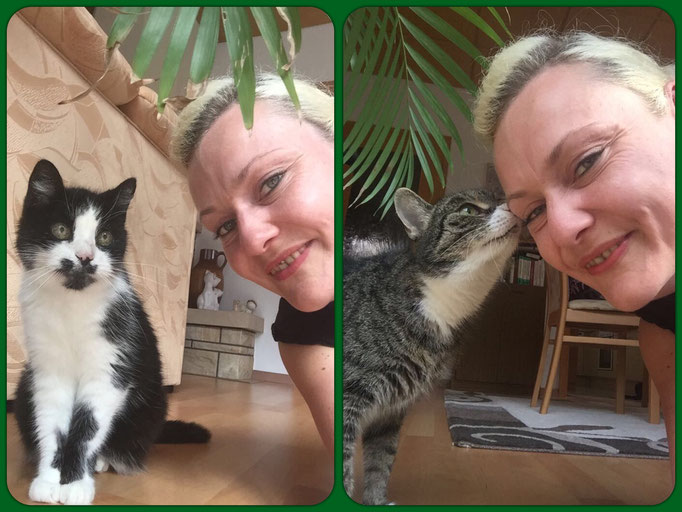 liebevolle Hauskatzen Flecki (l.) & Mikesch (r.)