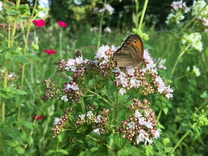 Nahrung für unzählige Insekten (Dagmar Schülke)