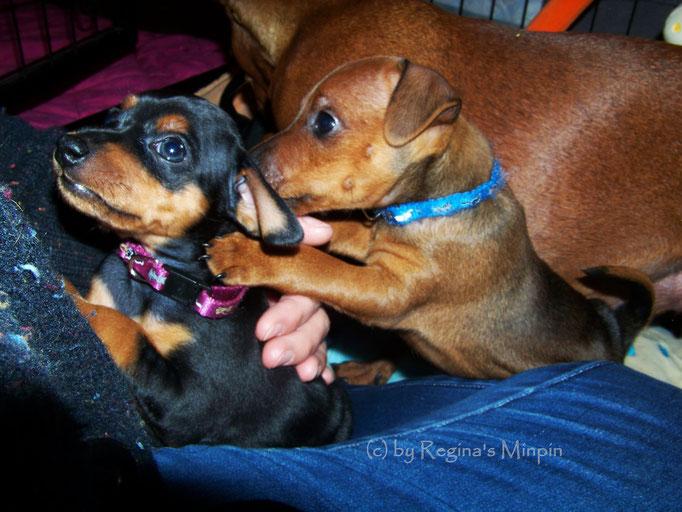 Issy & der freche Bruder Ivano