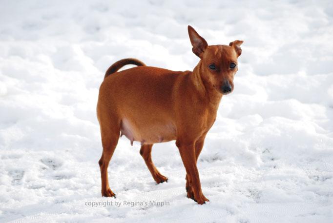 Eve macht einen kleinen Ausflug in den Schnee.