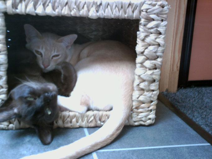 Hazel en Valentijn