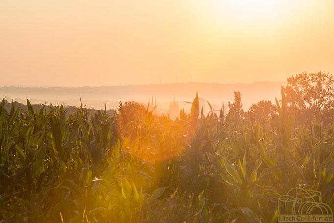 Sonnenaufgang über Erfurt, Thüringen