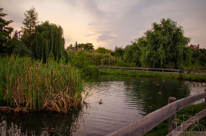 Abendstimmung im Kressepark, Erfurt