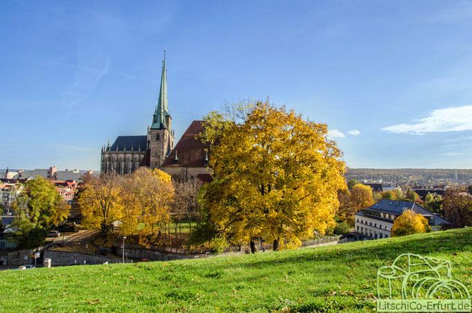 Der Domberg im Herbst