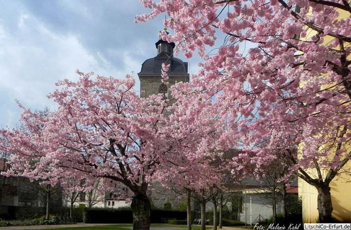 Frühling im Garten hinter dem Kaisersaal