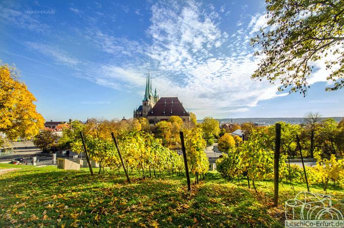 Erfurter Dom, Ausblick vom Petersberg