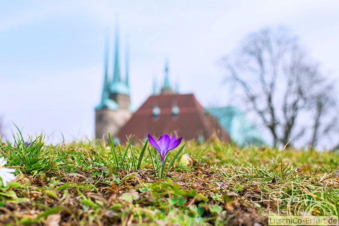 Frühlingserwachen in Erfurt