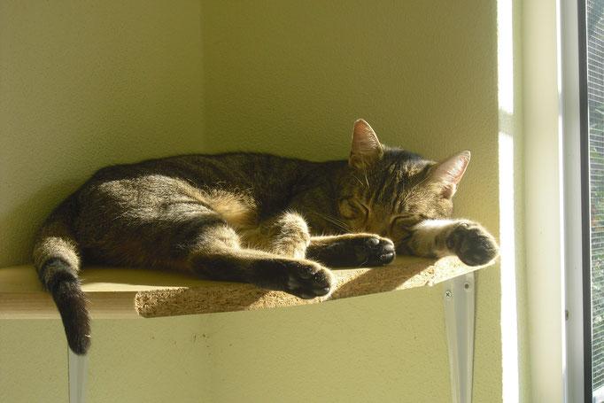 Bobby nimmt ein Sonnenbad