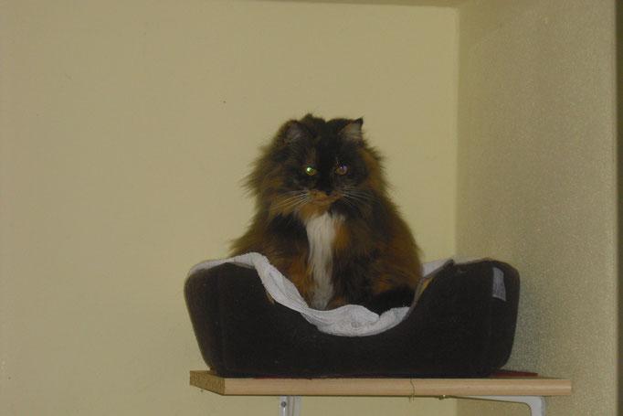 Bonnie auf Beobachterposition