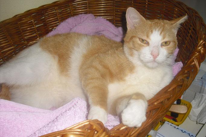 Charly in seinem Lieblingskorb