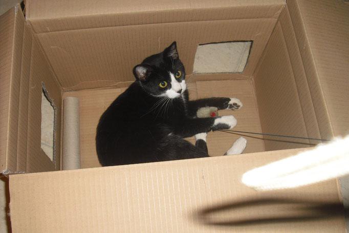 Oskar im Karton