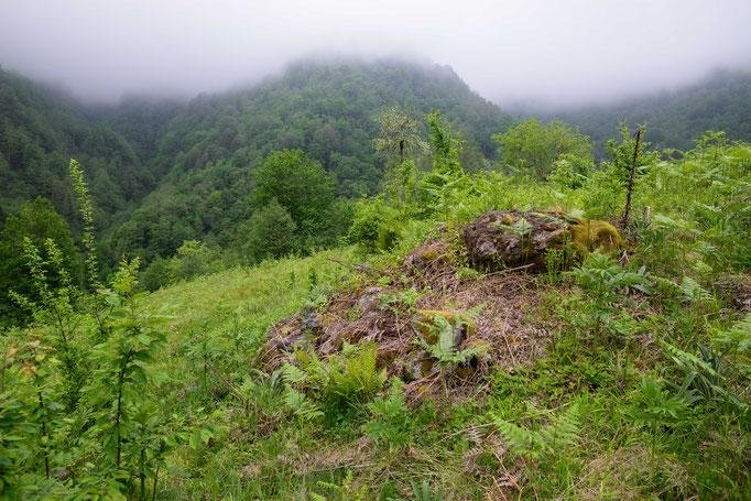 Habitat of Vipera kaznakovi in western Georgia