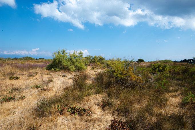 Habitat of Vipera ammodytes meridionalis in southern Greece
