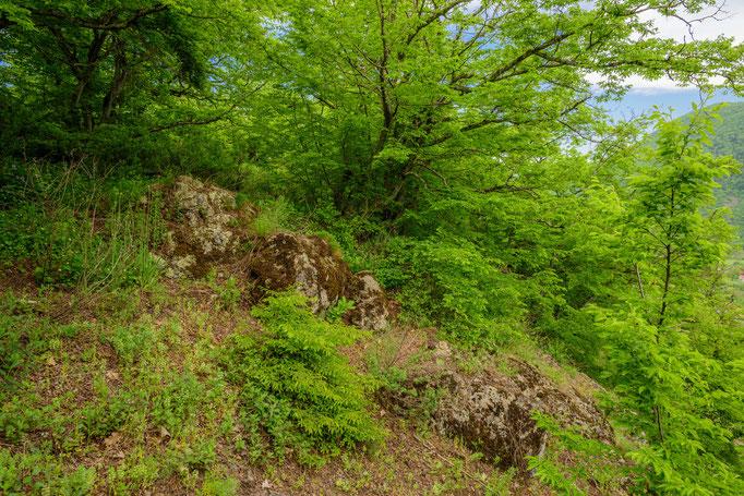 Habitat of Vipera kaznakovi 'tuniyevi' in central Georgia