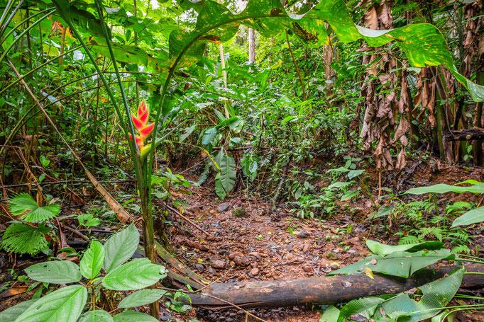 Habitat of Bothrops asper in caribbean Costa Rica