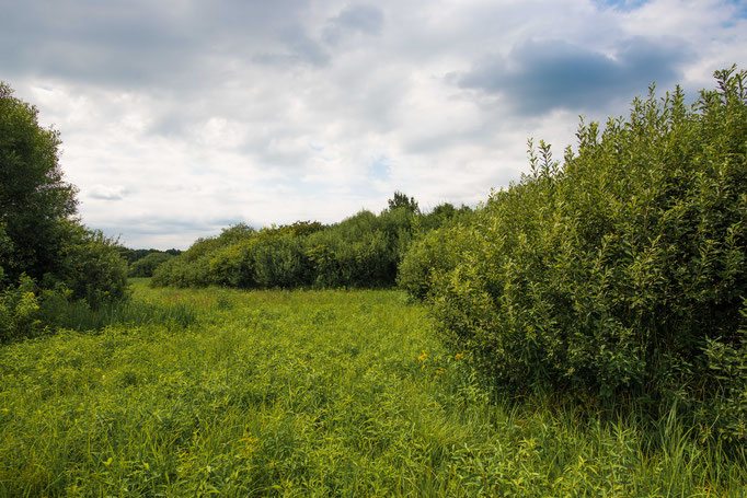 Habitat of Vipera berus bosniensis in Slovenia