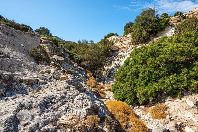Habitat of Macrovipera lebetina schweizeri in southern Greece