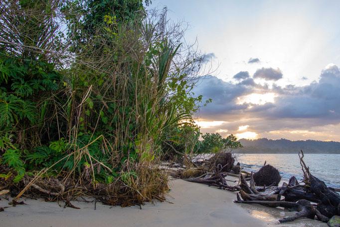 Habitat of Bothriechis schlegelii in coastal Costa Rica
