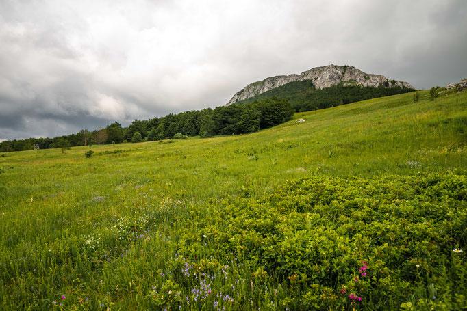 Habitat of Vipera ursinii macrops in eastern Croatia