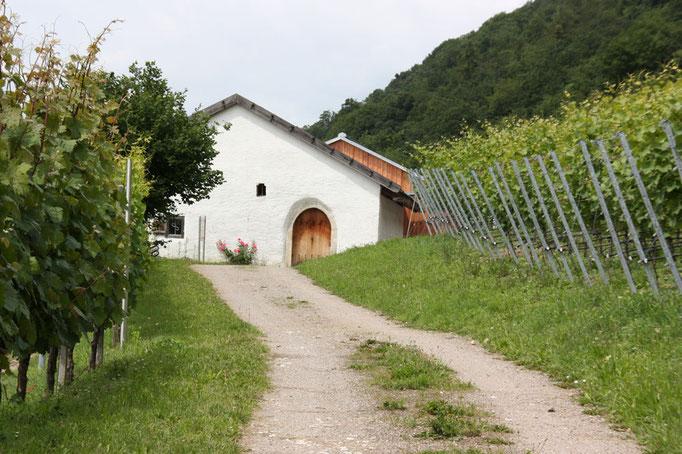 Das Baierwein Museum in Bach a.d. Donau, Foto: Landratsamt Regensburg
