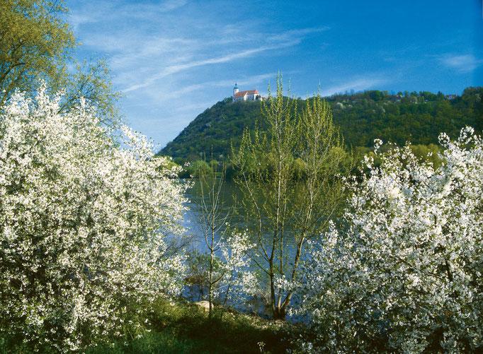 Blick auf den Bogenberg, Foto: Landratsamt Straubing-Bogen