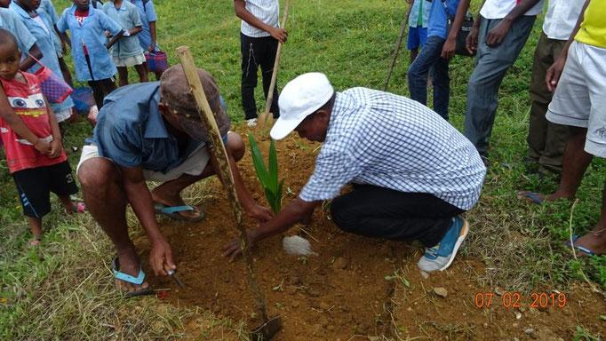 Plantation de 2 cocotiers après la collecte de la Tour d'Aygues
