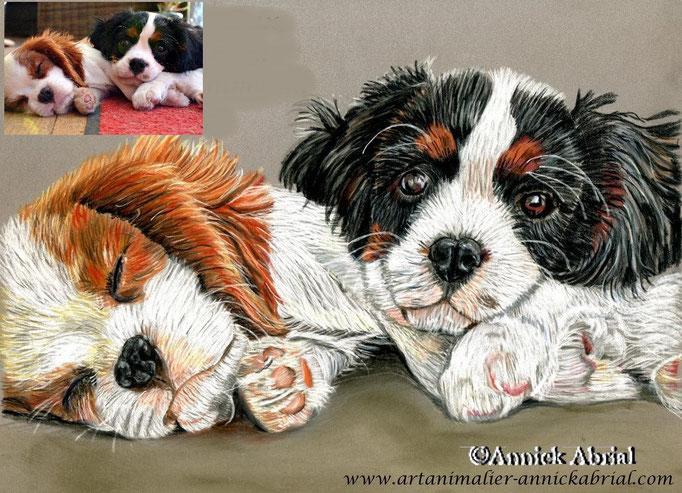 Portrait aux pastel chiens Holly et Harper (frère et soeur) format 24 x 30 cm