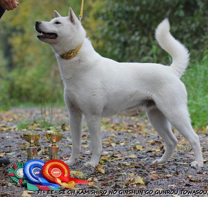 FI -EE -SE-DK- NORD CH, DKW-16, NORDW-16 KAMISHIRO NO GINSHUN GO GUNROU TOWASOU father of coming puppies